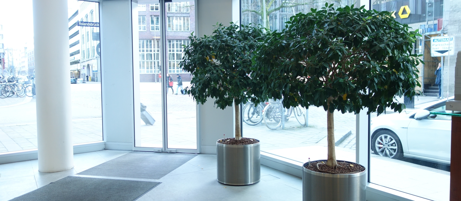 Hydro kultur b ro pflanzen gr ner raum for Raum pflanzen